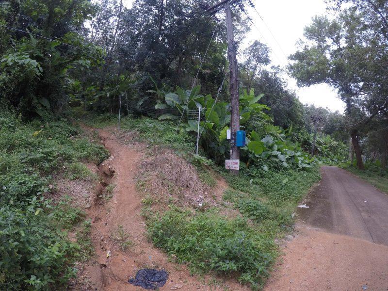 Поворот на лесную дорогу к Будде